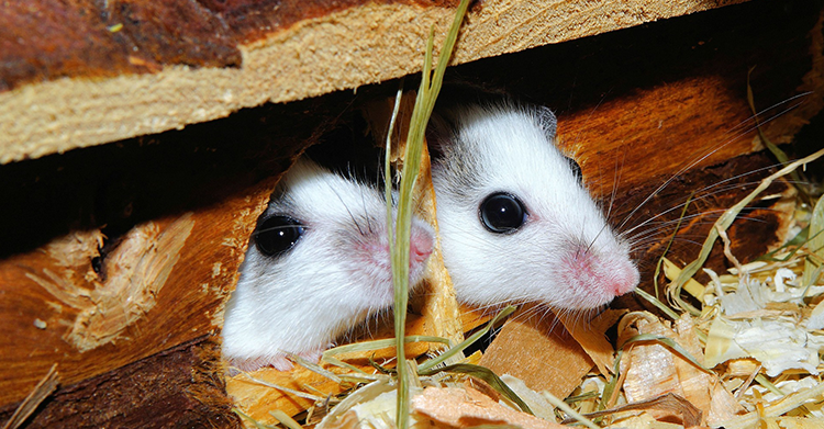 How to Keep Mice & Rats Out of Your Home.