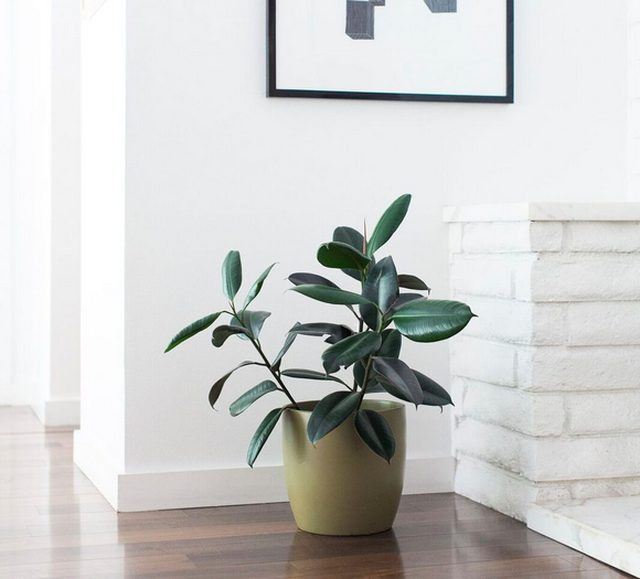 12 Houseplants That Naturally Clean Air