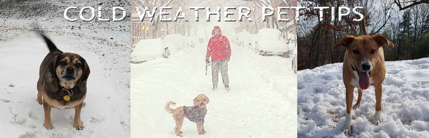 Winter Pet Safety – SNOW DAY!
