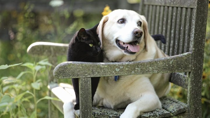 We Are Family:  Our dog and cat are part of our blended family.