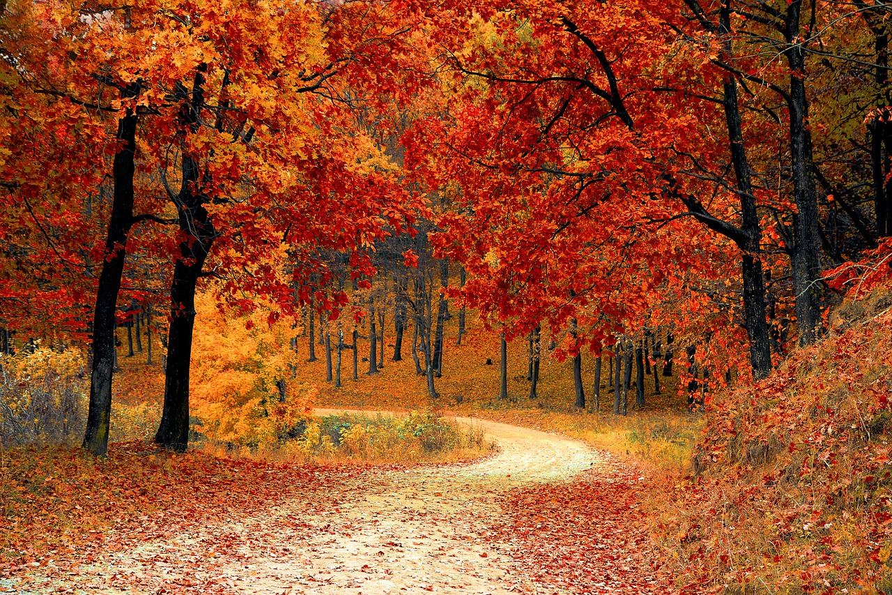 Where to See Fall Leaves Change Color