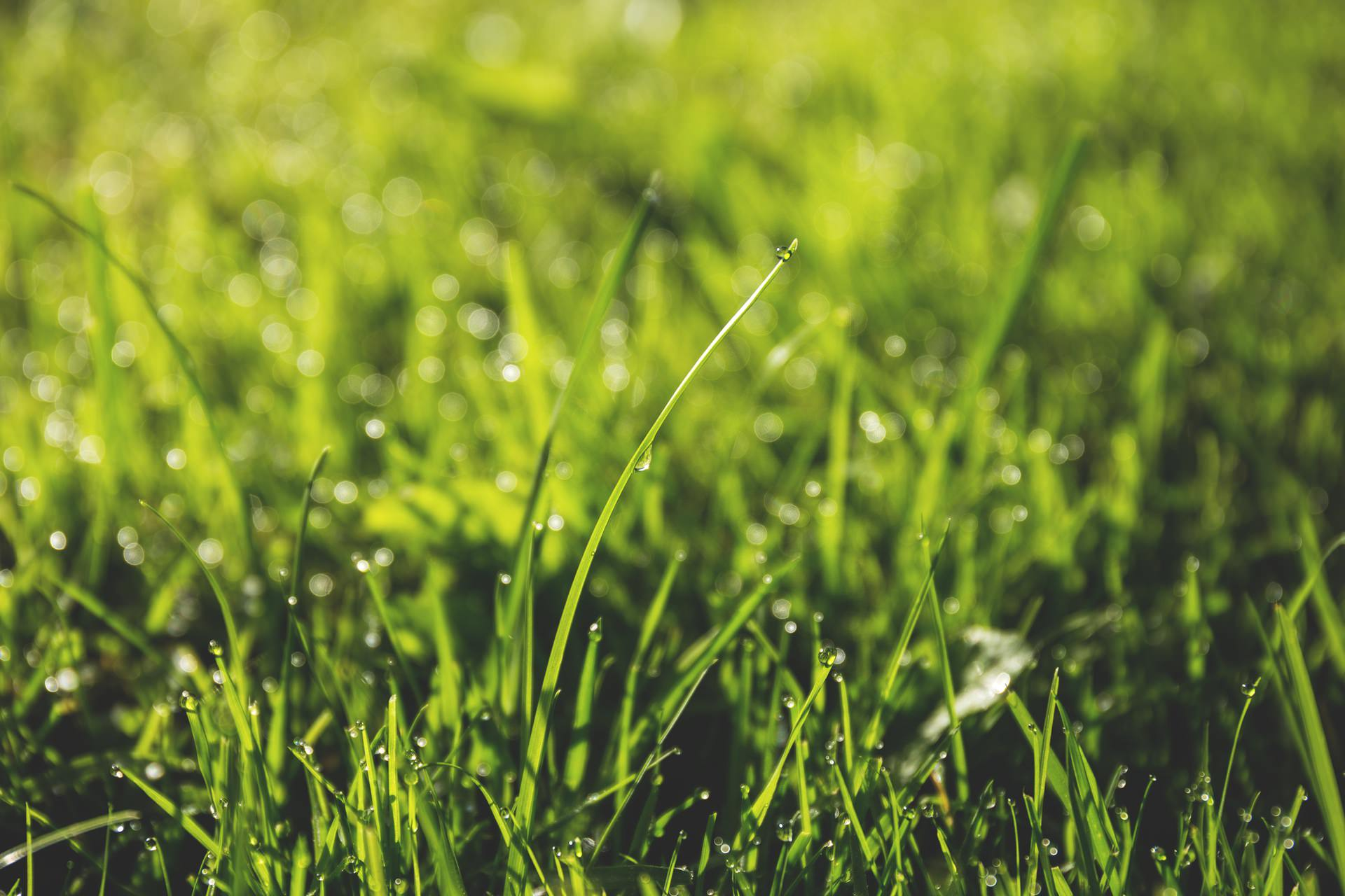 ​Taking Care of Your Lawn Without Wasting Resources
