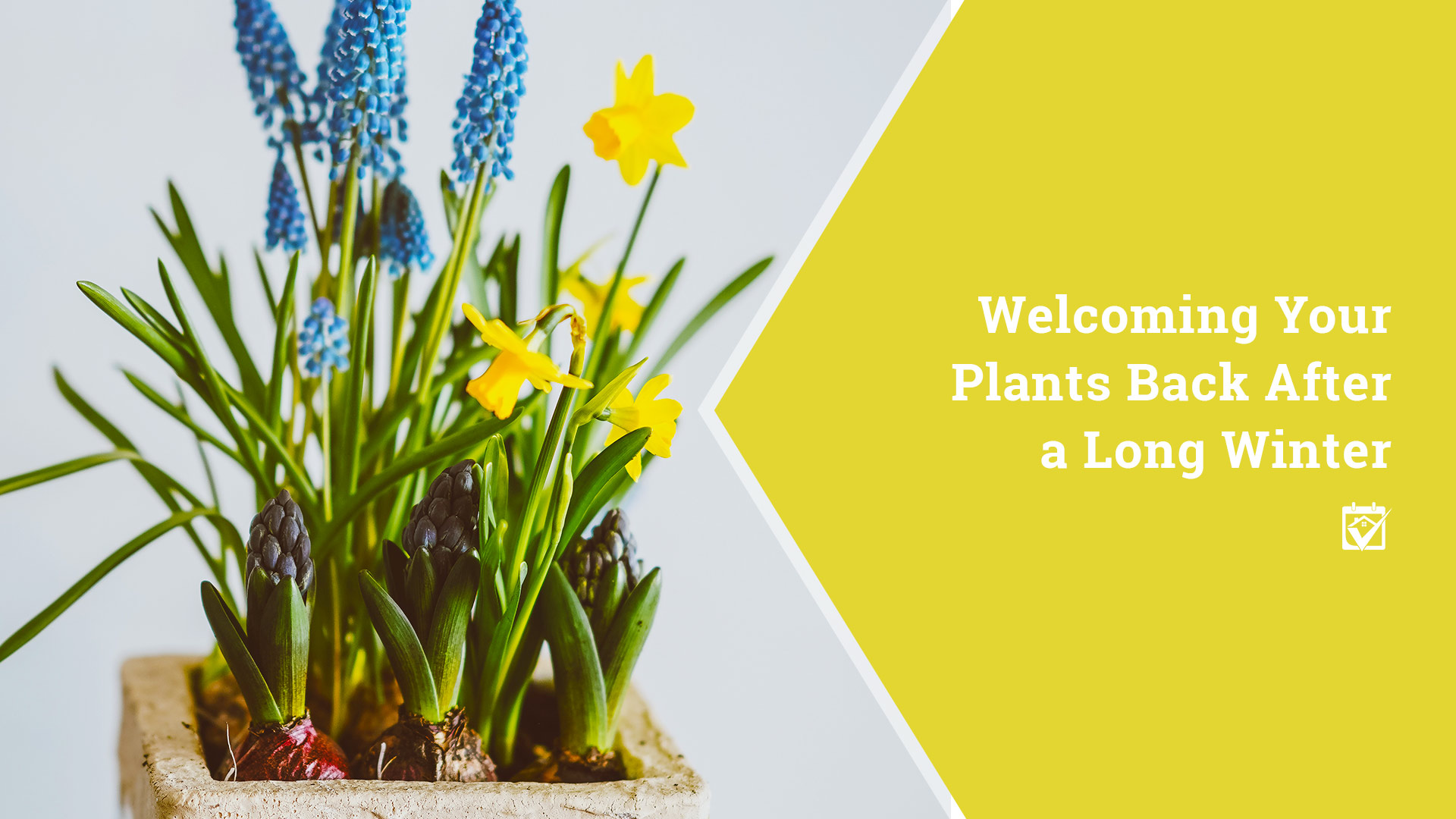 Welcome your plants to Spring